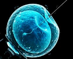 photo-fino-ivf-insemination-test